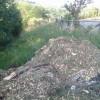 Abbattimento alberi ad alto fusto